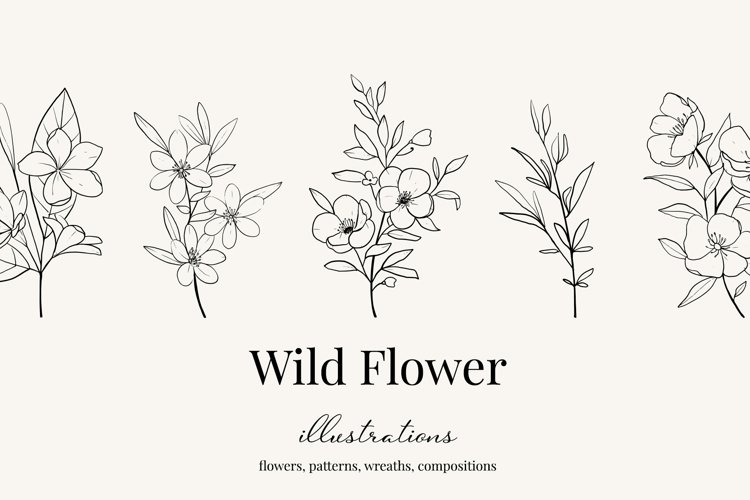 Wildflower botanical illustrations