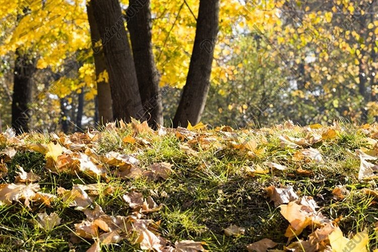 deciduous foliage in the autumn example image 1