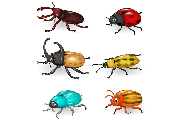 Cartoon Beetle Vector Set