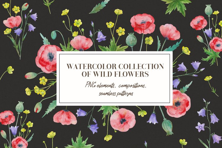 Collection of watercolor wild flowers