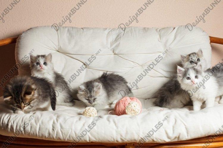 Five grey kittens