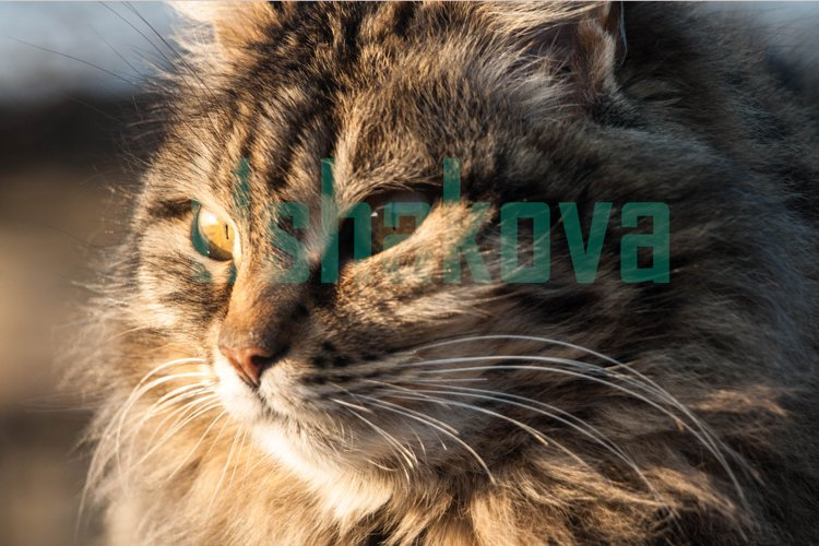 Fluffy domestic cat example image 1