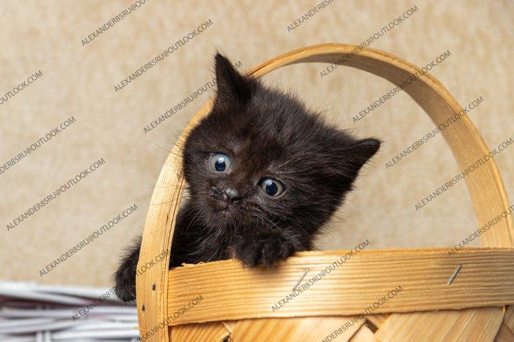 13 photos of little kittens