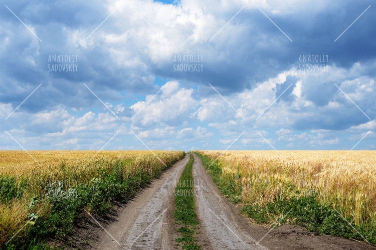 Country road among wheat field under clouds