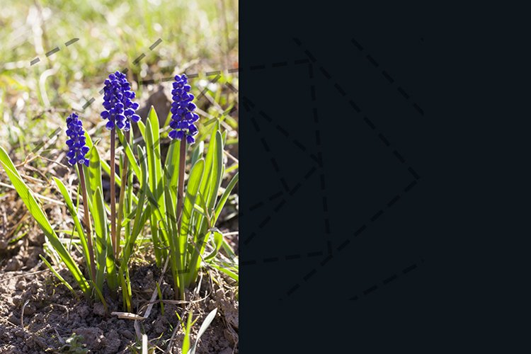 little blue flowers example image 1