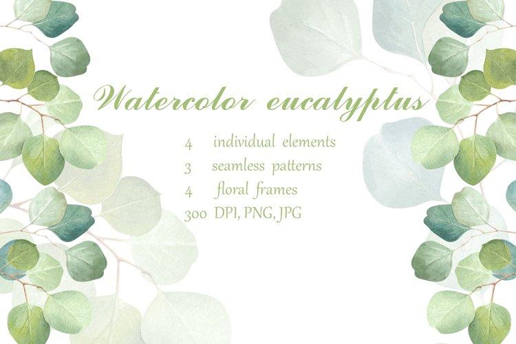 Watercolor eucalyptus.