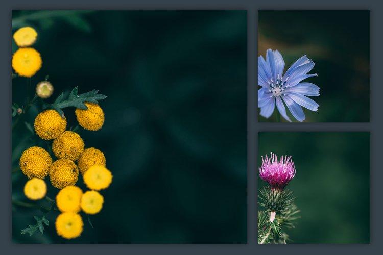 Instagram Photo Pack - Flora Vol. 1 example 1