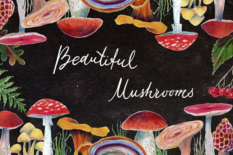 Mushrooms set example image 1