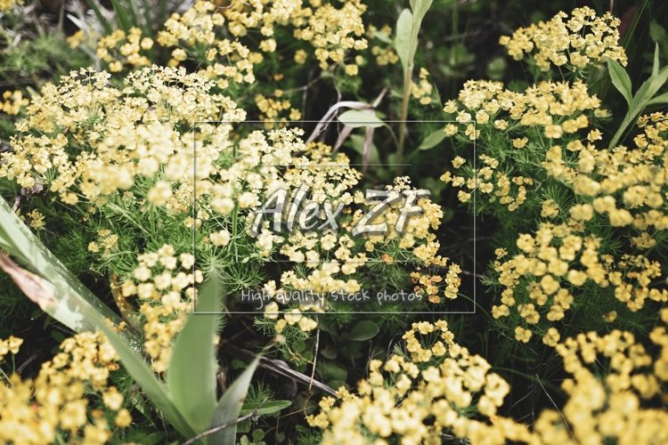 Yellow little flowers. Creative color