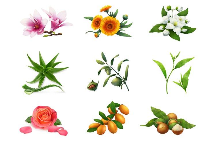 Magnolia, rose, aloe, jasmine, jojoba, macadamia, tea, argan