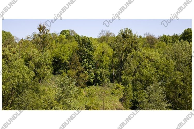 trees and plants example image 1