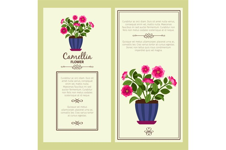 Camellia flower in pot banners example image 1