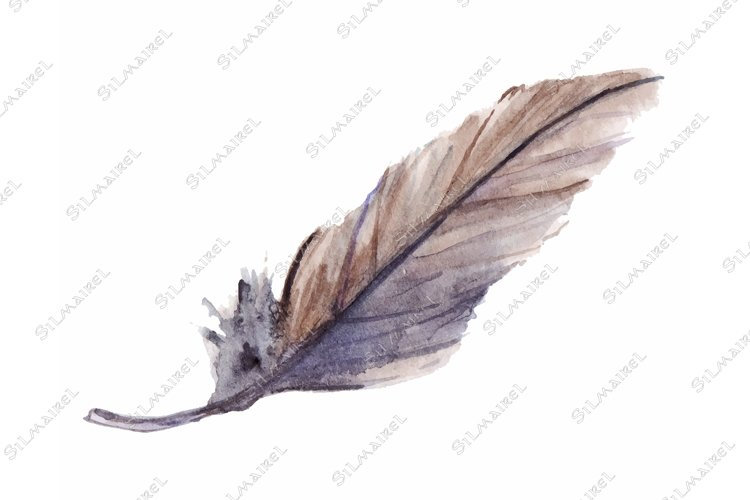 Watercolor gray grey blue violet brown feather isolated art example image 1