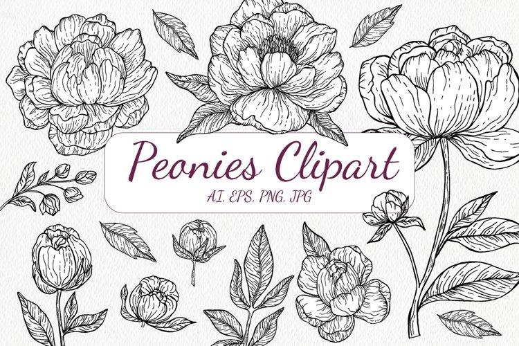 Black and White Peony Flowers Clipart - Botanical Line Art