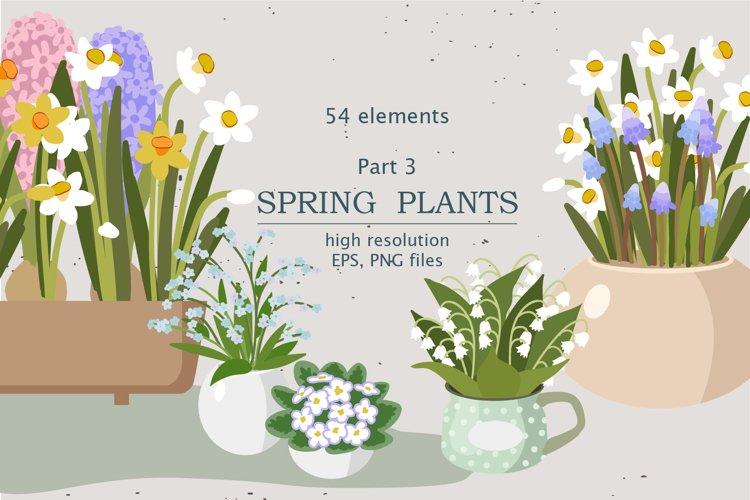 Spring Indoor Plants | Part 3