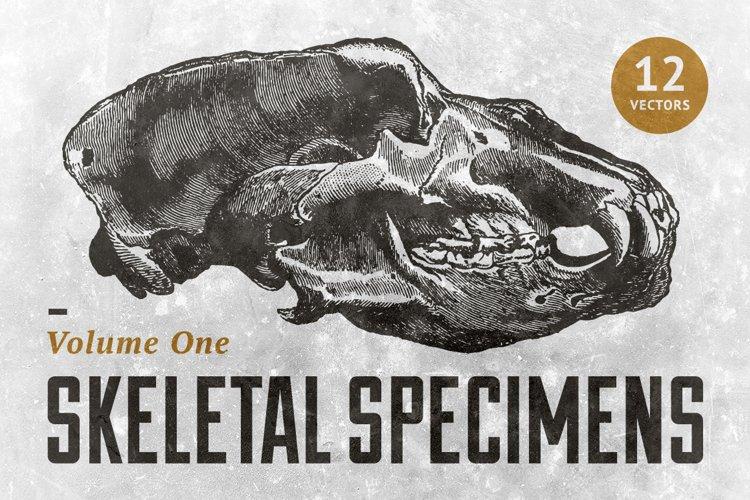 Skeletal Specimans Vol. 1