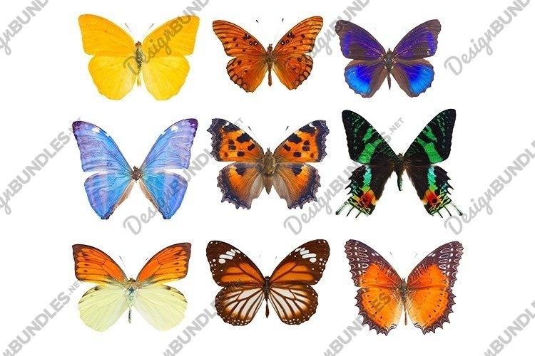 Set of butterflies example image 1