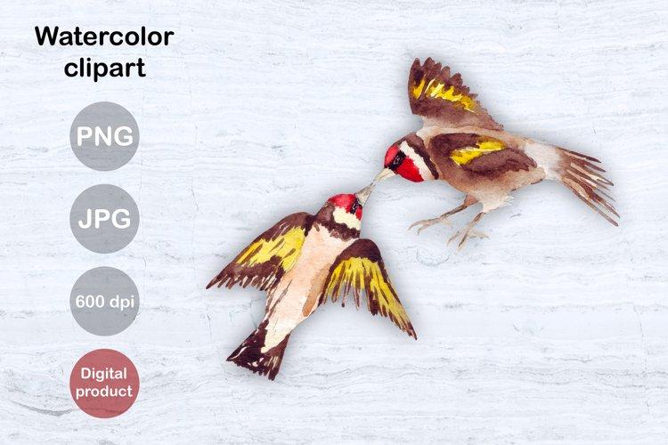 Valentines Sublimation Love struck birds Watercolor clipart