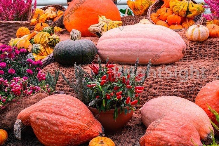 Pumpkins & flowers - 3 example image 1