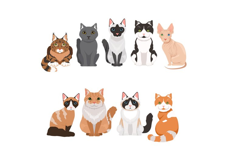 Domestic cats in cartoon style. Vector illustrations isolate example image 1