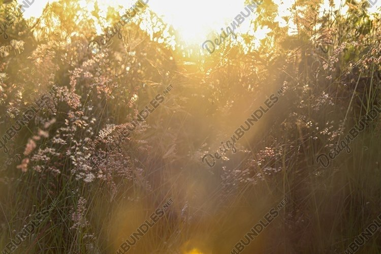 Multicolor flowers field background with summertime warm example image 1