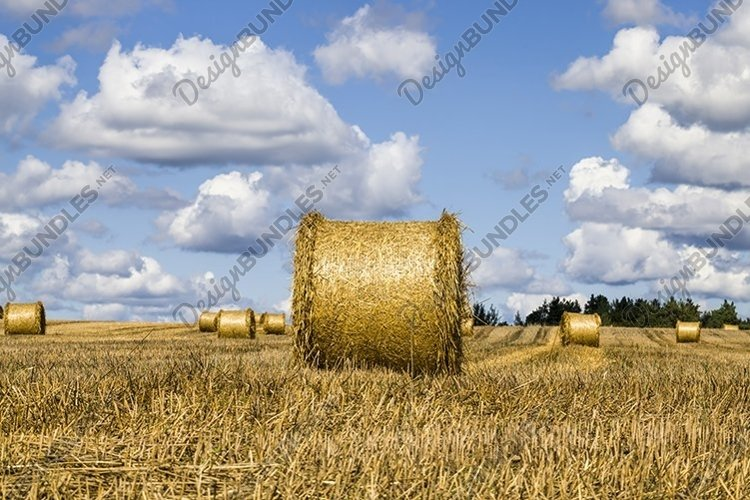 agricultural field after harvesting wheat for food example image 1