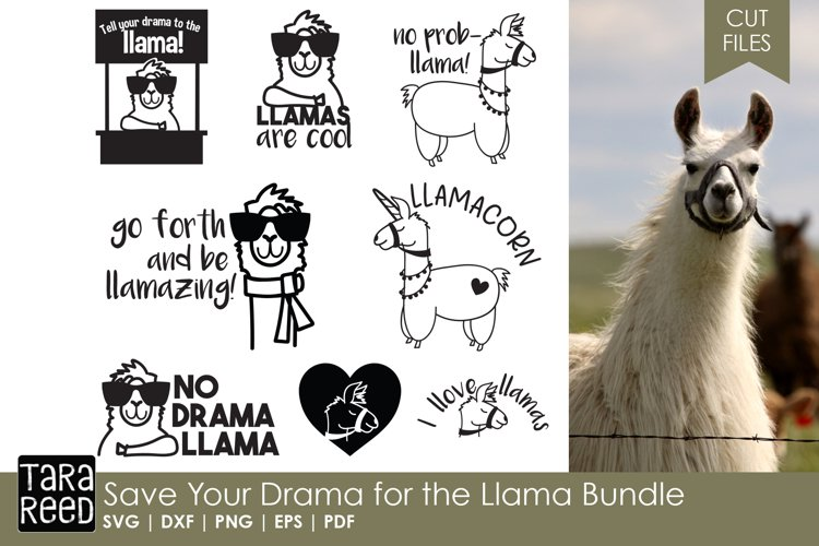 Save Your Drama for the Llama Bundle - Free Design of The Week Font