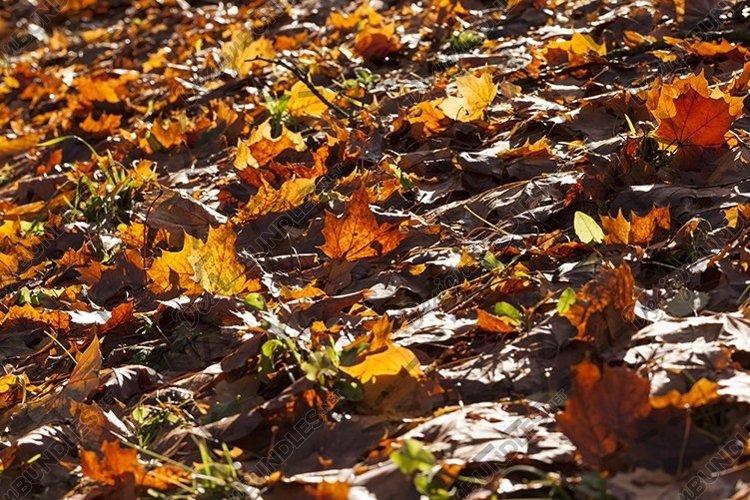 old foliage example image 1