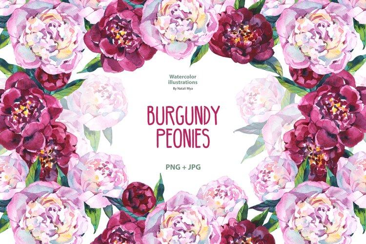 Watercolor burgundy peonies example image 1