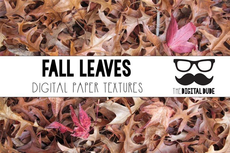 Fall Leaves - Forest Floor - Digital Paper Set - 12 Images example image 1
