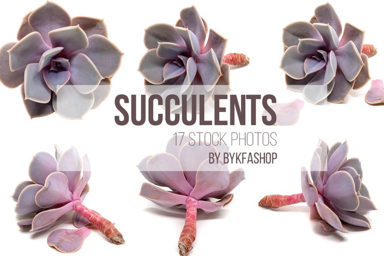 Succulent Plants Isolated Photo Bundle example image 1