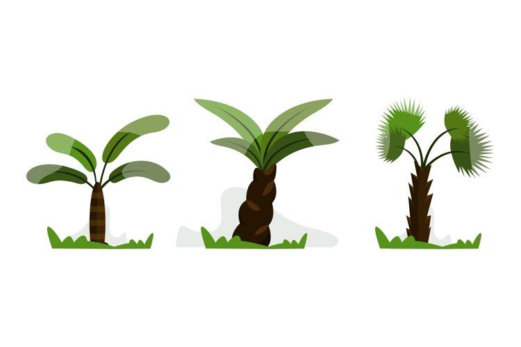 Palm Tree Illustrations