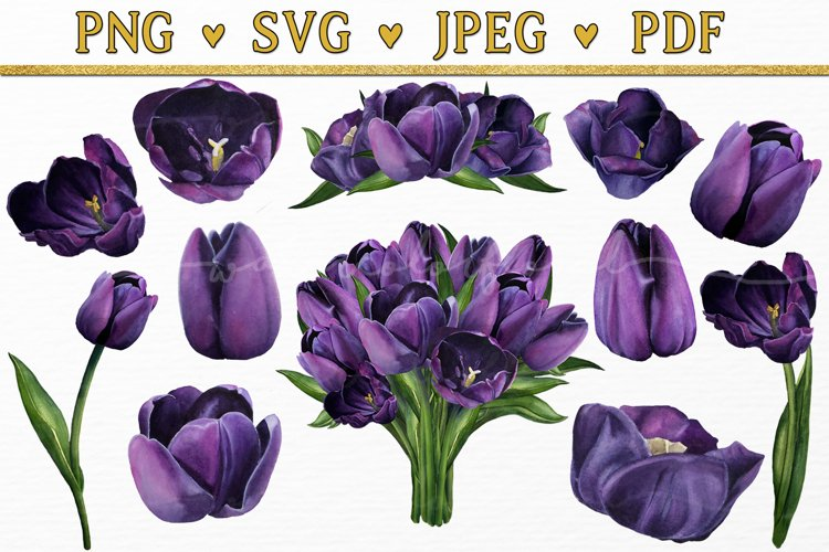Purple Tulip Flowers Watercolor Floral Bouquet Clipart svg