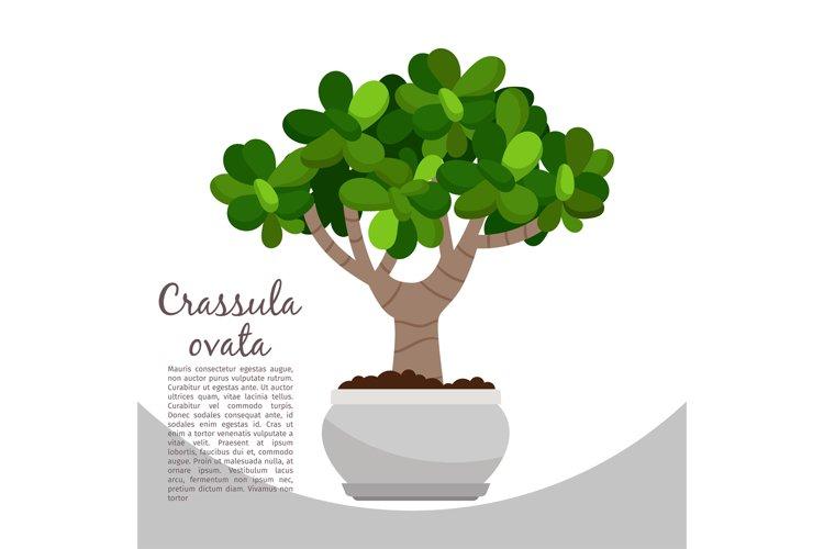 Crassula ovata plant in pot banner example image 1