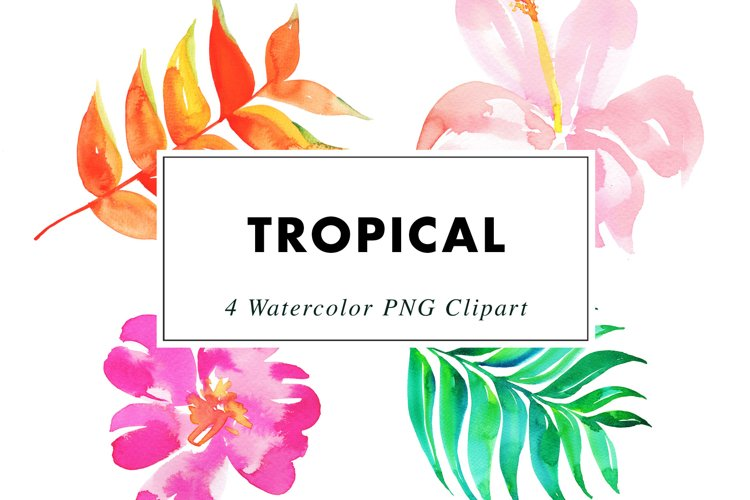 Watercolor Tropical | Clipart PNG Illustrations