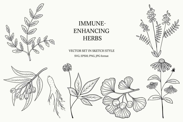 Immune-enhancing herbs