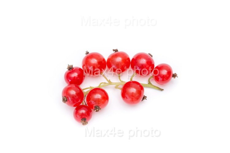Red currant closeup isolated on white background
