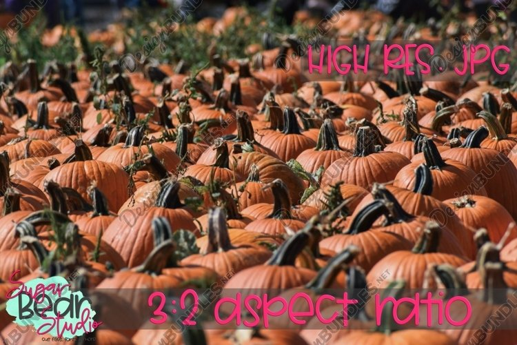 Pumpkin Patch - Stock Photo example image 1