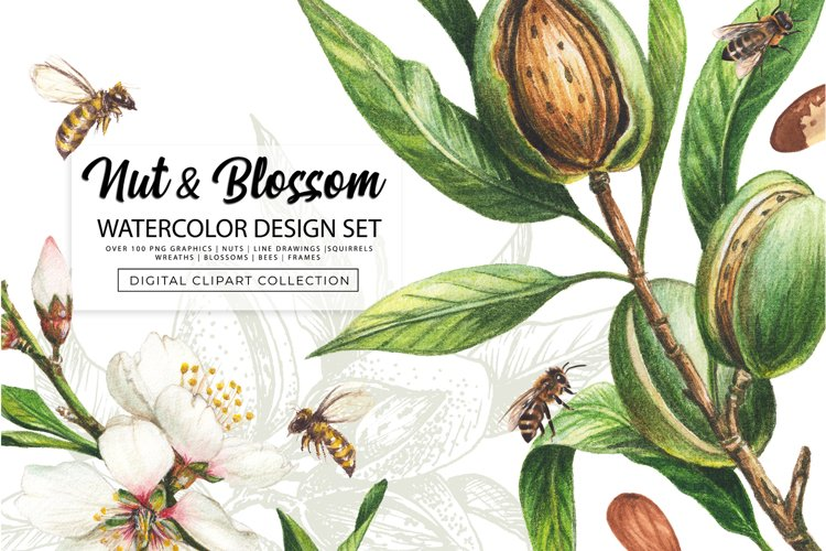 Nut & Blossom Watercolor Design Set