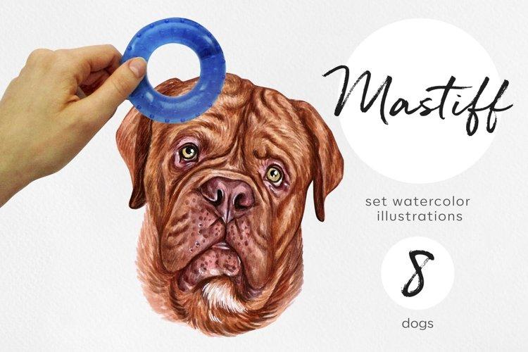 Mastiff. Watercolor dog illustrations. Cute 8 dog