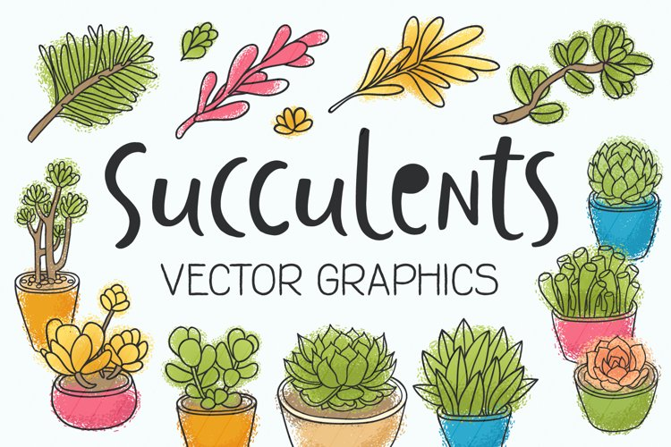 Succulents 14 vector illustrations