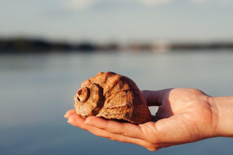 Close up of woman hand holding big beautiful rapana sea shell example image 1
