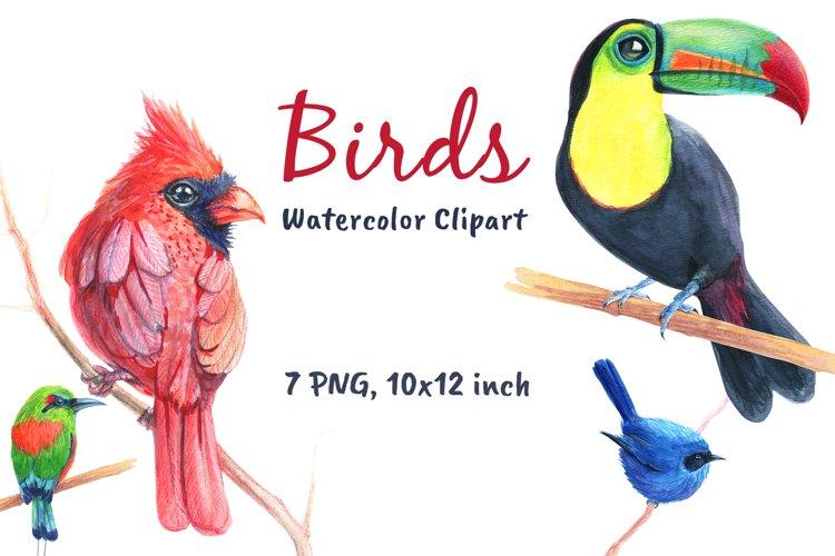 Birds Watercolor Cardinal Clip Art example image 1