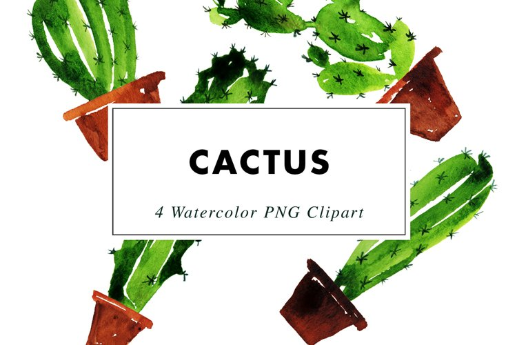 Cactus Illustrations Watercolor   Clipart PNG   Vector EPS