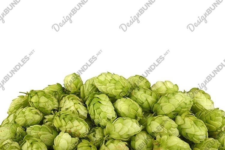Heap of Fresh Green Hops Isolated on White example image 1