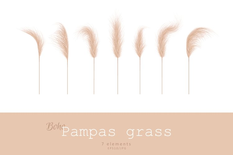 PAMPAS GRASS vector set example image 1