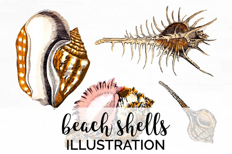 Shells Clipart Animals Beach example image 1