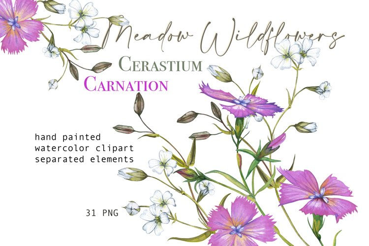 Watercolor floral clipart Pink Carnation White wildflowers P
