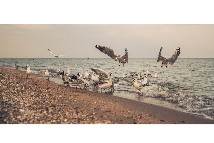 Flock of seagulls on a deserted sea shore example image 1