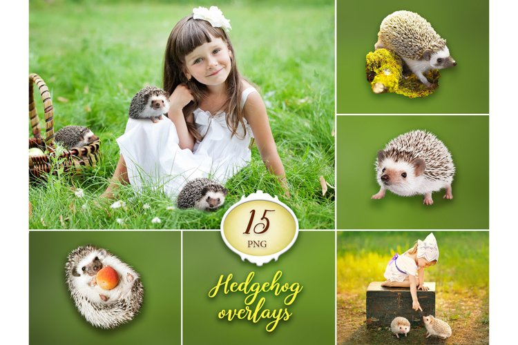 15 Hedgehog Photo Overlays